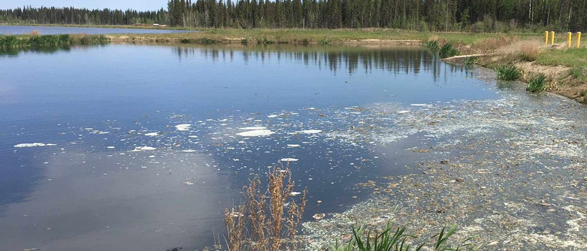 Lagoon Before Waste Go Treatment